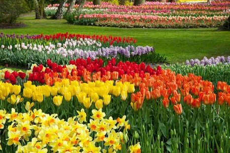 quote, picture, flowers, tulips, spring, life, people, happiness, future, present, love, thoughts, feelings, heart, soul, peace, balance,