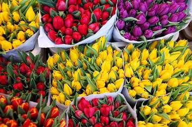 picture, flowers, spring, tulips, life, on the way, decisions, happiness, courage, colors, feelings, emotions, people, fear, peace, dreams, future, strength